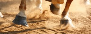 Equestrian Dust Control