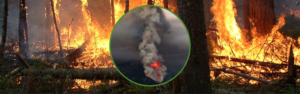Minimizing Damage Before and After Wildfires